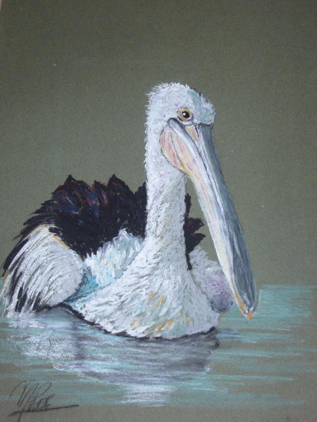 australie /plican australie-pelican.jpg