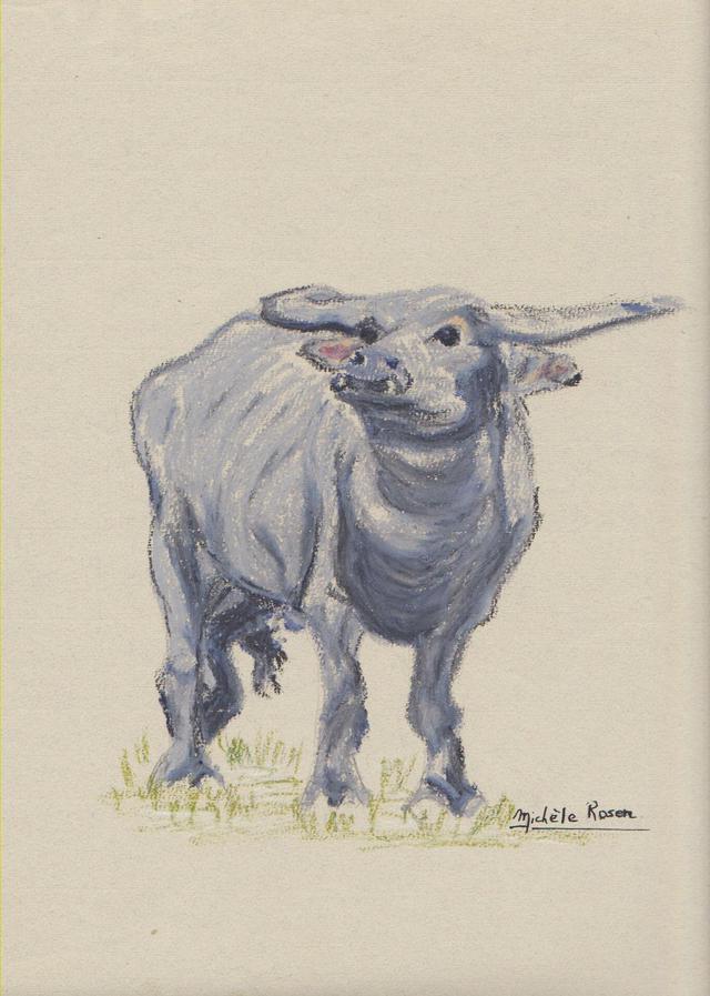 australie / buffalo australie-buffalo.jpg