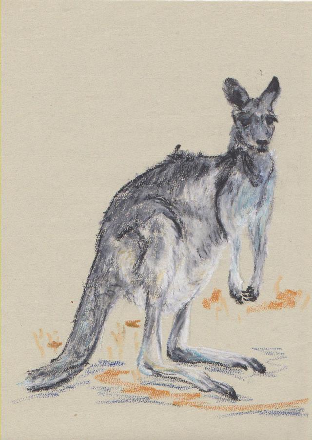 australie/kangooroo australie-kangooroo.jpg