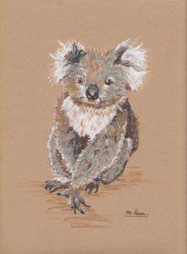 australie / koala australie-koala.jpg