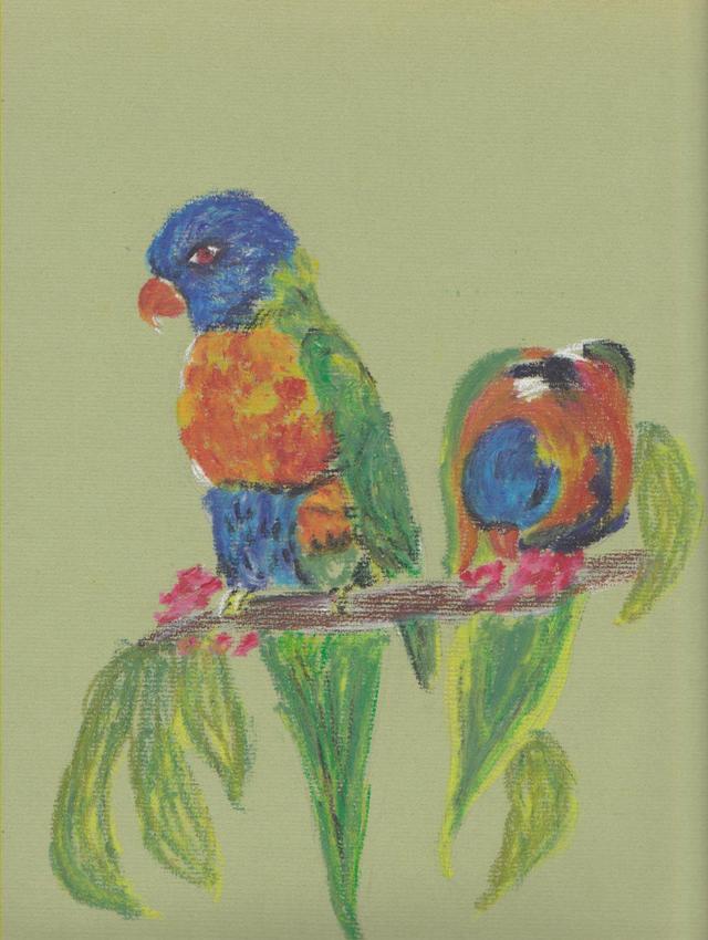 australie / perroquets australie-perroquets.jpg