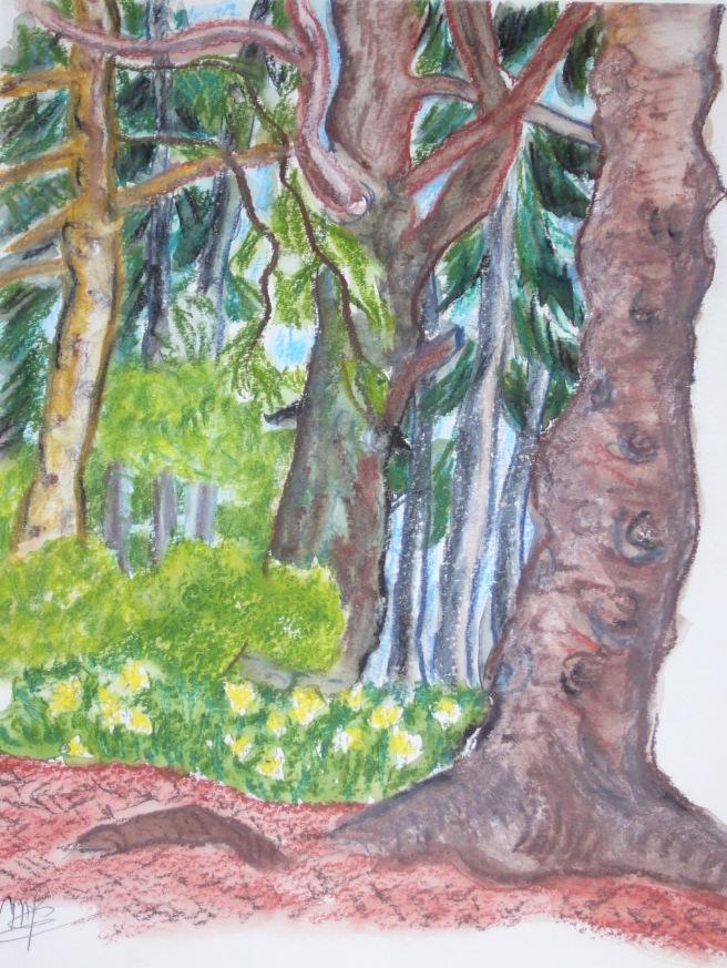 forêt de Bélesta